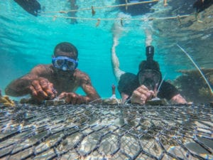 U.S. Army 2nd Lt. Michael Fink, who serves as a platoon leader with the 1st Battalion, 27th Infantry Regiment, 2nd Brigade, Inf. Brig. Combat Team, 25th Inf. Division, and a Fijian Soldier serving with the 3rd Battalion, Fiji Inf. Regt., transplant a piece of healthy coral by fixing it to a steel grate with cable fasteners, during a coastal and reef revitalization project for Exercise Cartwheel 2019, near Nadi, Fiji, Aug. 13. Part of both the Republic of Fiji Military Forces and the U.S. Indo-Pacific Command's defense strategy is to addresses climate change. Opportunities, such as Exercise Cartwheel, provide a platform to deepen understanding and preparedness, which strenthens and enhances key relationships with partner nations for a free and open Indo-Pacific.